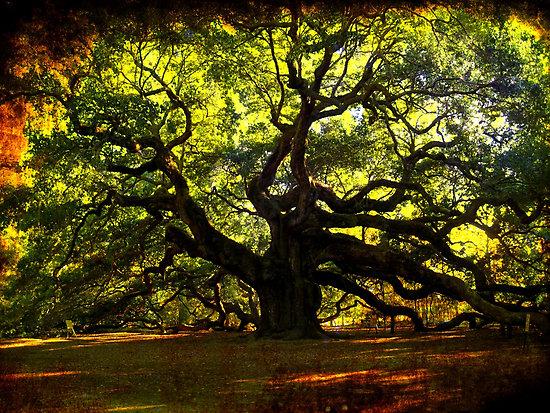 cover-angel-oak