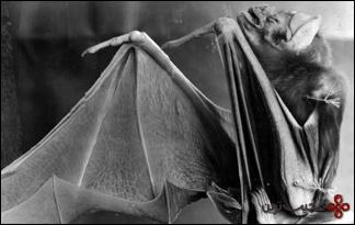 خفاش-خوناشام