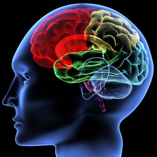 عکس-کاور-مغز