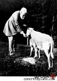 گوسفندی با شش پستان