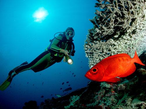 cover 08.underwater