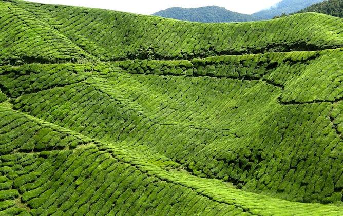 عکس کاور ارتفاعات کامرون