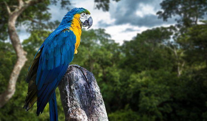 cover amazon rain forest