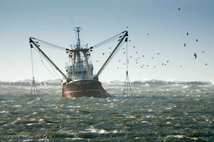 cover top fish export