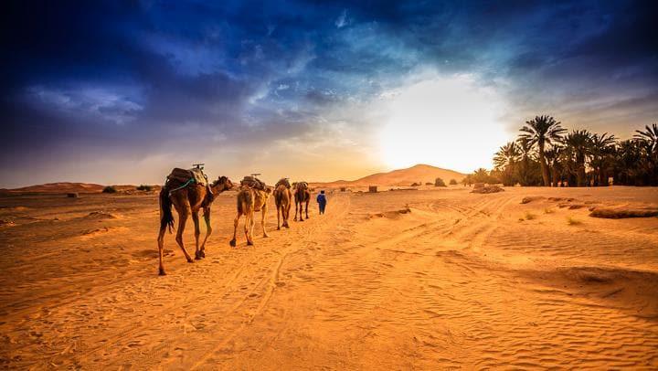 cover sahara desert getty large