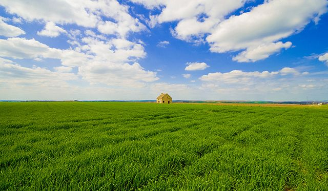 france house field