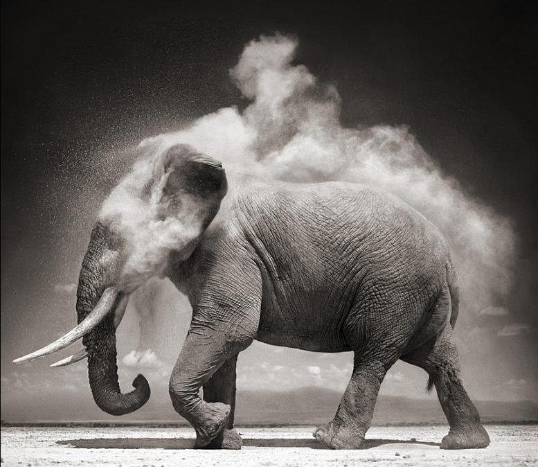 عکس کاور فیل